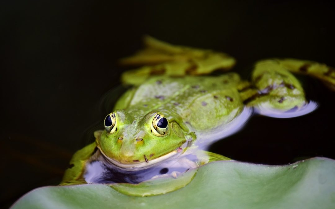 Symbolbild: Frosch im Wasser